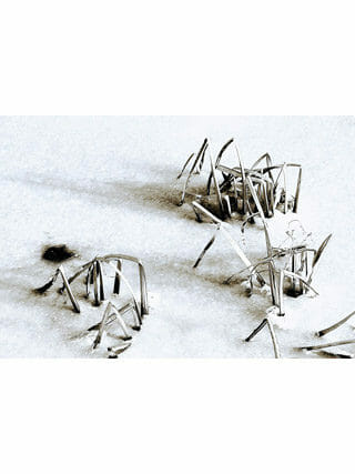 janna van der meer Sporen