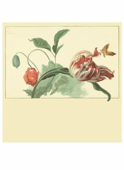 Eijffinger fotobehang Tulip and Poppy cream
