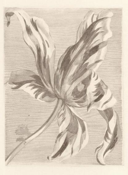 Masterpiece Eijffinger fotobehang tulp