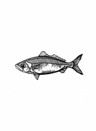 geometrische vis van mdf voor aan de muur