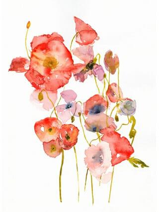 Poppies postkaart